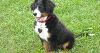 Hunde-Welpen Grundausstattung / Starterpaket