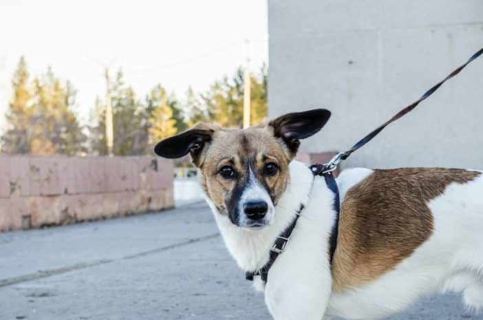 Leinenpflicht für Hunde - so sind die Bestimmungen der Bundesländer