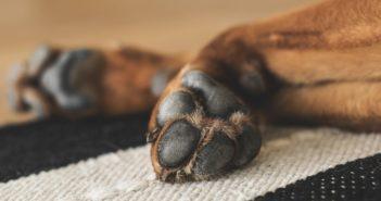 Hund Pfoten Pflege Winter