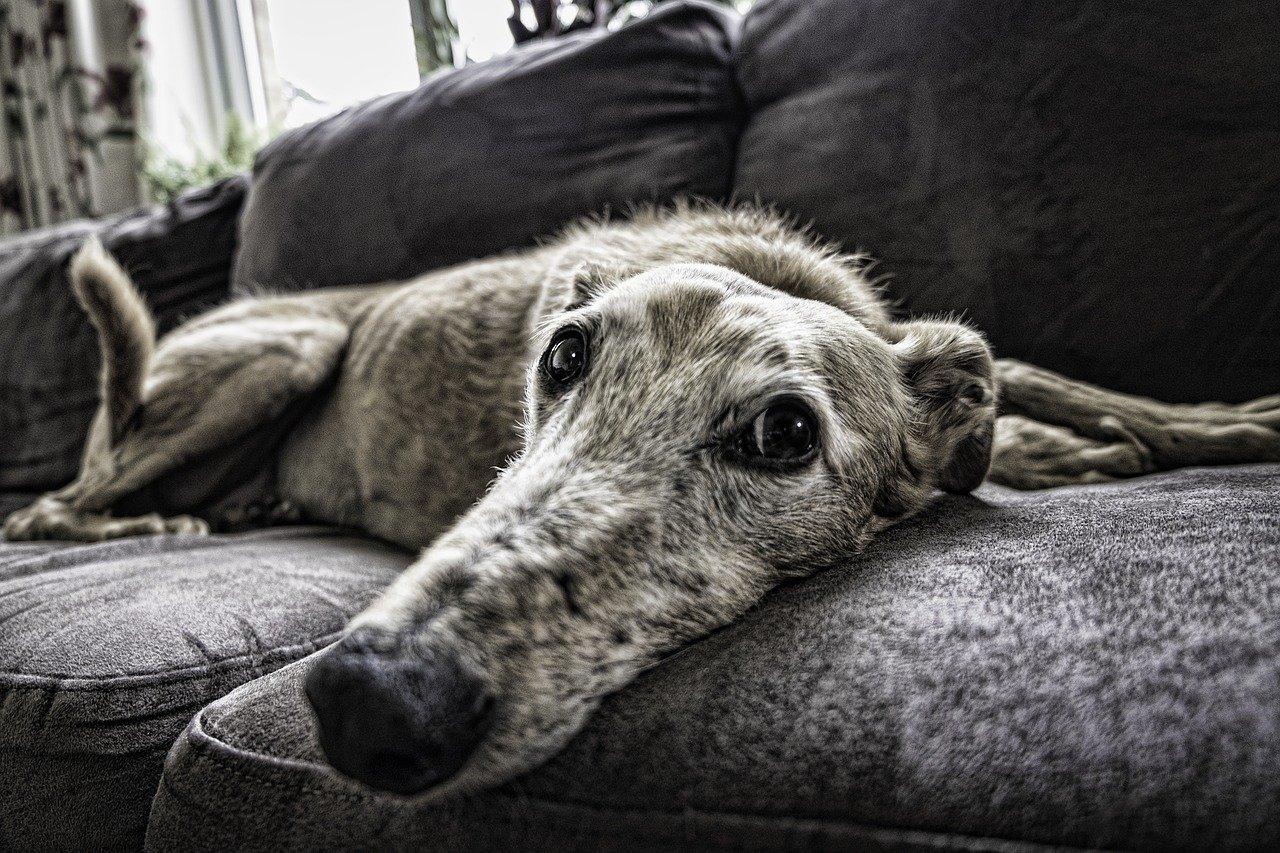Hundeurin entfernen Geruch Sofa