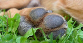 Hunde-Pfoten-Pflege im Winter
