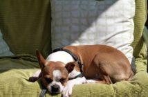 ortung von entlaufenden hunden per gps tracker oder peilsender. Black Bedroom Furniture Sets. Home Design Ideas