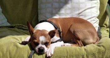 H undeurin entfernen Geruch Sofa