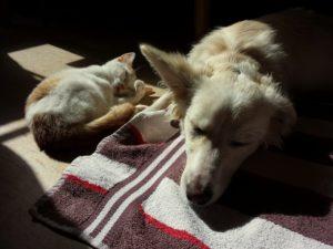 Hund und Katze - Freunde werden
