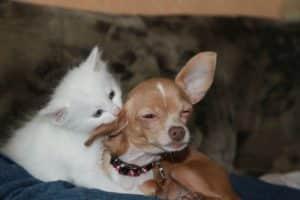 Hund und Katze wachsen gemeinsam auf