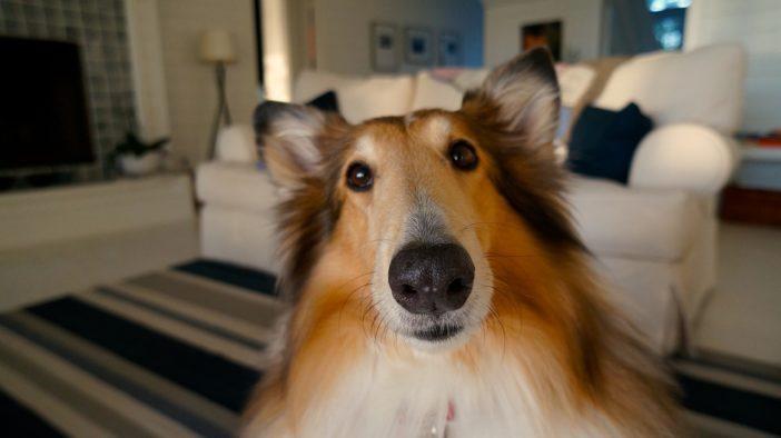 Hundehaare entfernen Tipps