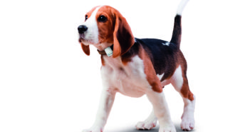 Hunde Ortung: GPS Tracker und Peilsender