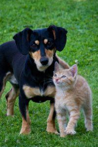 Hund jagt Katze abgewöhnen