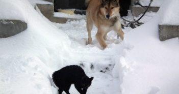 Hund jagt Katze