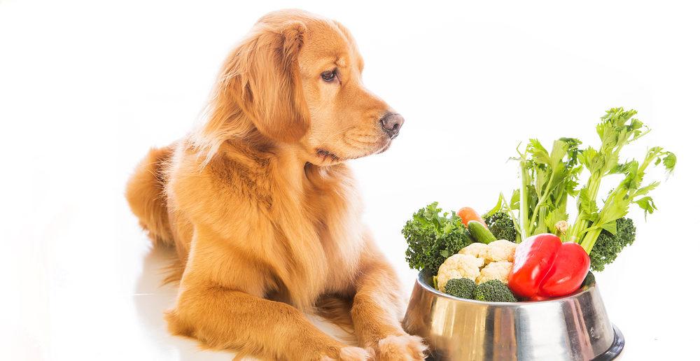 Hund Ernährung pflanzliche Inhaltsstoffe