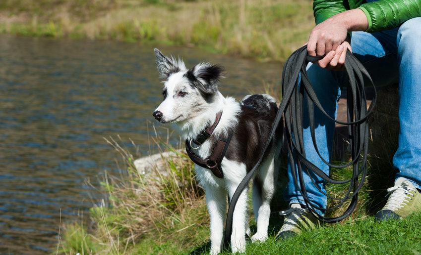 Leine ziehen Training für Hunde