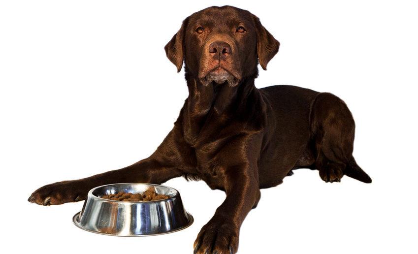 Hund: Anti-Giftköder Training