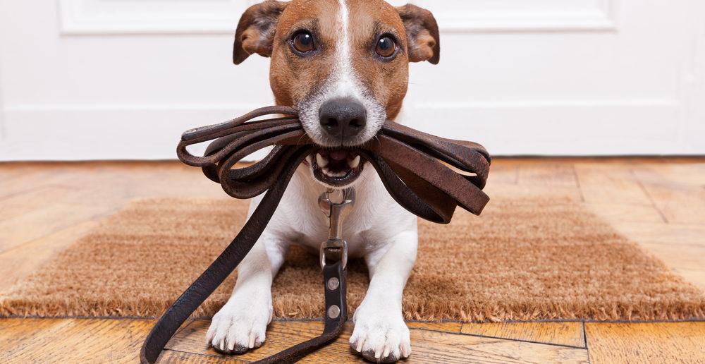 Leinenführigkeit Hund
