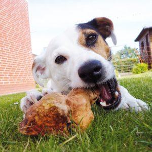 Kauwurzel für Hunde zur Zahnpflege