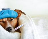 Die Symptome der 10 häufigsten Hundekrankheiten