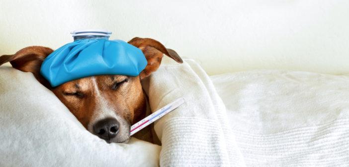 Symptome von Hundekrankheiten