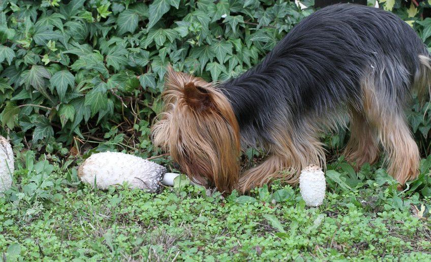 Erbrechen Hund giftige Stoffe