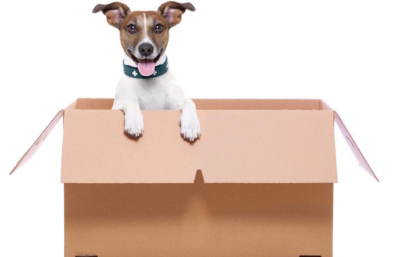 Homöopathie beim Hund - Bachblüten Globulis bei Veränderungen