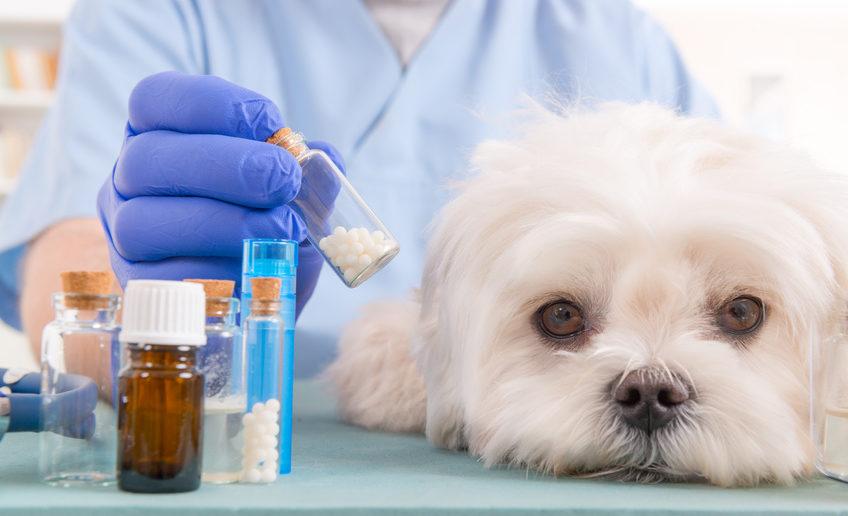 Homöopathie Hund bei Erbrechen