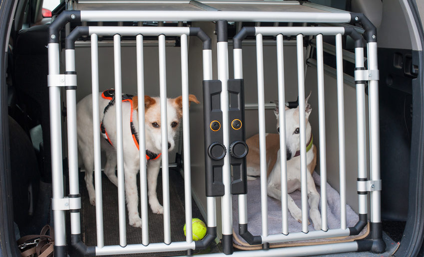 Hund Autofahren Transportbox