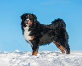 Fellwechsel beim Hund – So unterstützt du deinen Hund mit der optimalen Fellpflege
