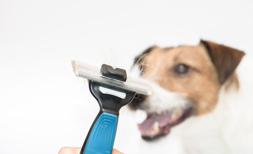 Hund bei Fellwechsel unterstützen