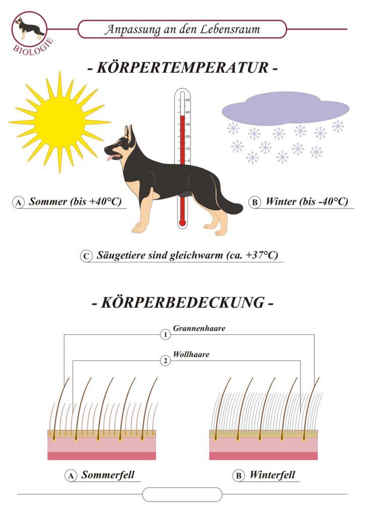 Sommerfell und Winterfell Hund