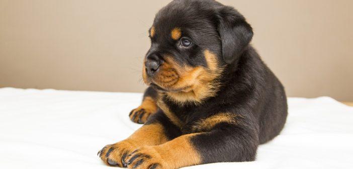 Wann ist ein Hund ausgewachsen?