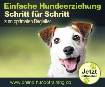 Mehr Informationen zum Online Hundetraining