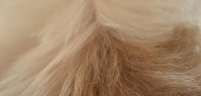 Ursachen für Schuppen beim Hund – und wie du sie behandeln kannst