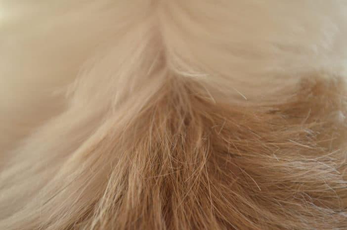 Ursachen Für Schuppen Beim Hund Und Wie Du Sie Behandeln Kannst