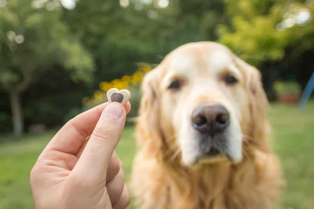Bild / Foto: Hund Kot essen abgewöhnen
