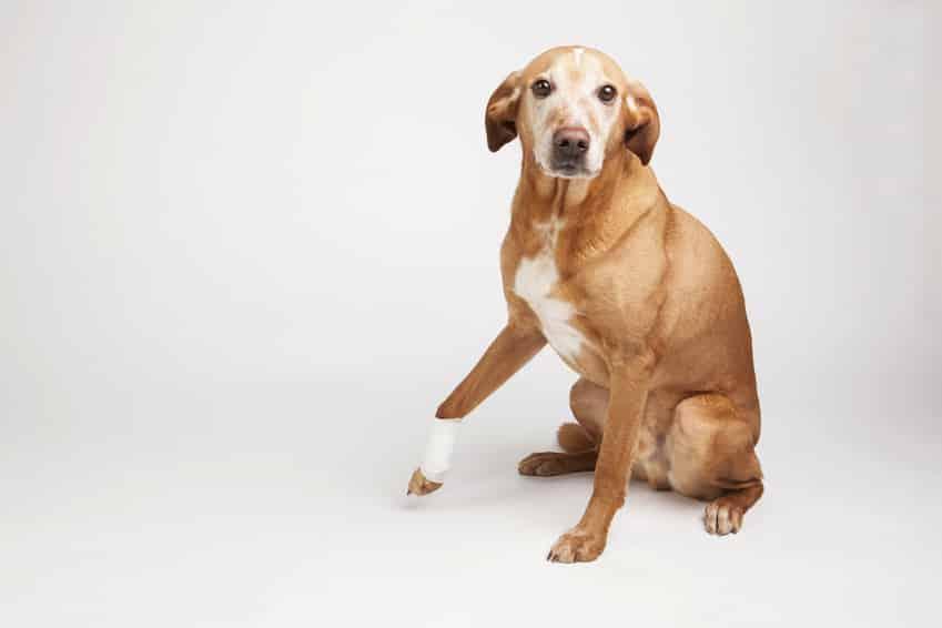 dein hund zittert das k nnen m gliche ausl ser sein hundeblogger. Black Bedroom Furniture Sets. Home Design Ideas