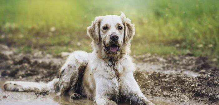 Iiiihh, der Hund stinkt! – Mögliche Ursachen und Abhilfe