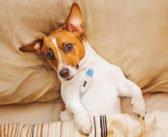 Erkältung beim Hund – Symptome, Behandlung & Vorbeugung