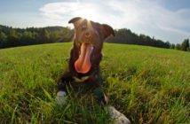 Hund Sommer Hitze