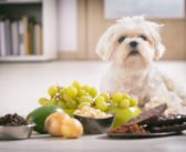 Diese Lebensmittel sind für Hunde giftig | Liste