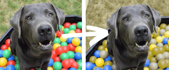 Welche Farbe Sehen Hunde