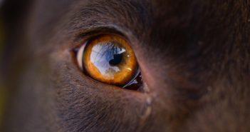 Wie sehen Hunde - Farbenblind