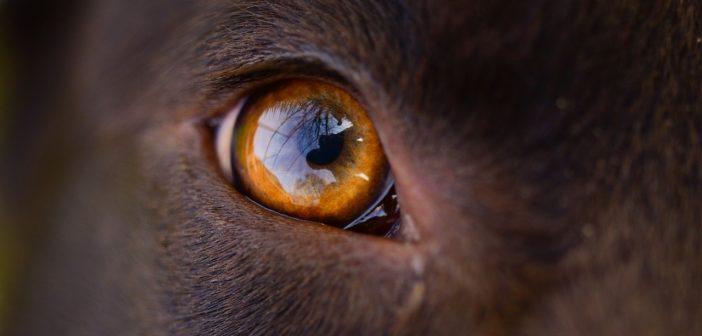 Wissenswertes über Hundeaugen: Welche Farben können Hunde sehen?