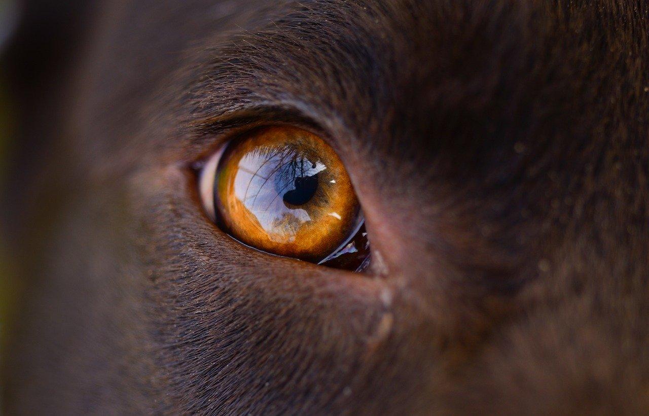 Können Hunde Farben Erkennen