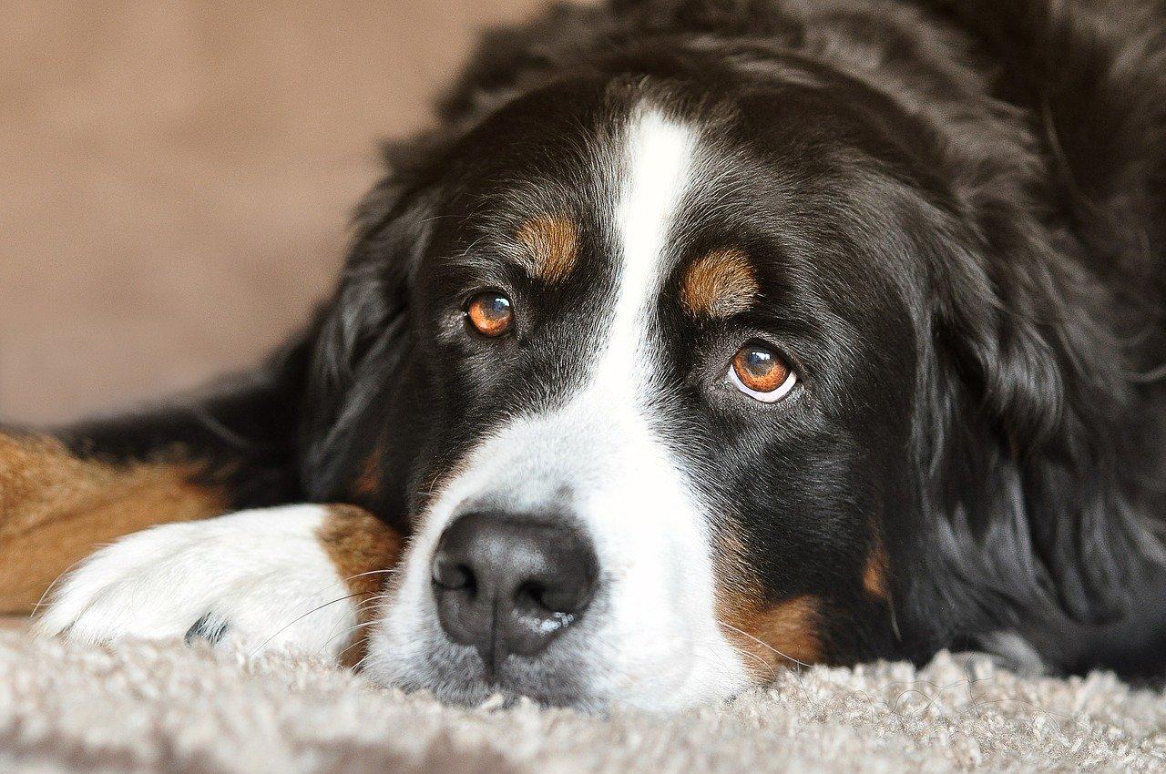 Läufigkeit Hund